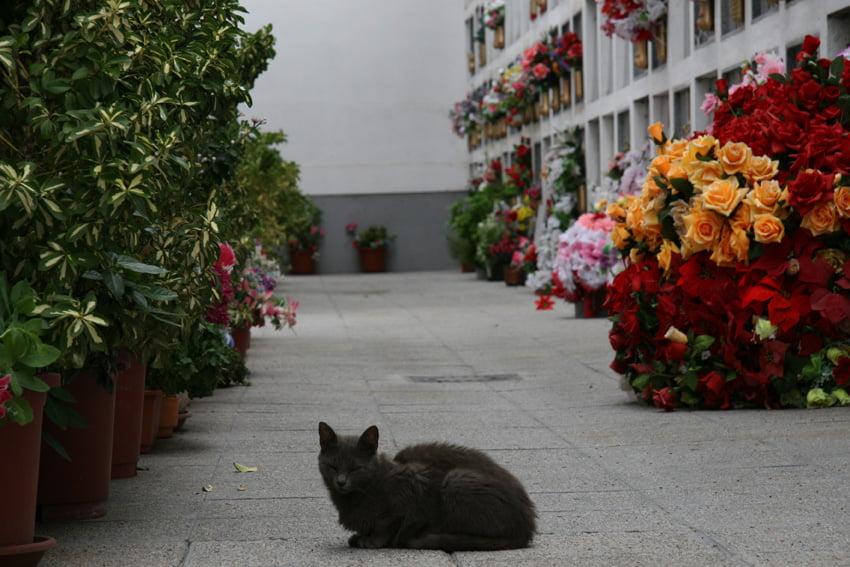 gato-en-cementerio
