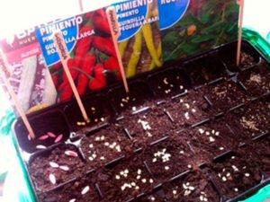 huerto urbano semilleros