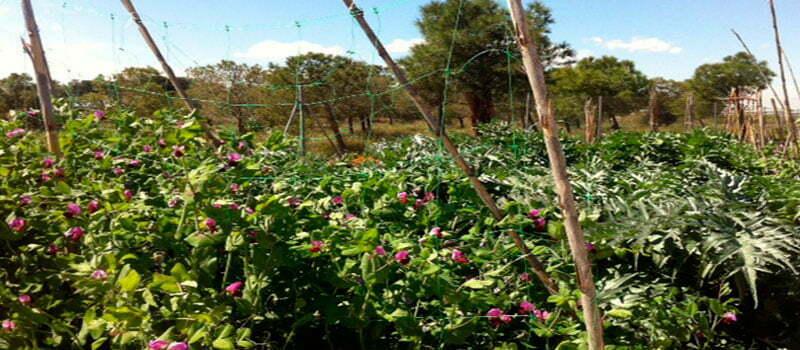 labores del huerto. planteros