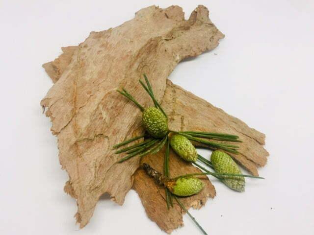 semillas de cedro y corteza de árbol