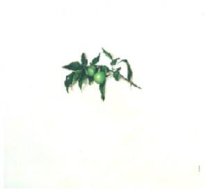 manzanitas-verdes-sanmamed